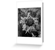 Wilting in the Window Greeting Card