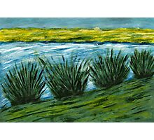 Reeds by River. Photographic Print