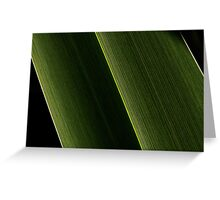 The stark beauty of New Zealand flax Greeting Card