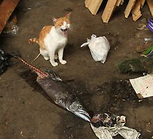 Cat eats fish, Valparaiso, Chile. by David Pillinger