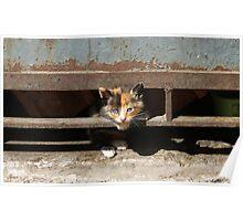 Stray kitten, Valparaiso, Chile. Poster