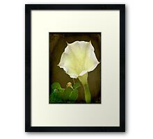 Angel's Trumpet ©  Framed Print