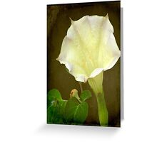 Angel's Trumpet ©  Greeting Card