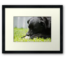 Tennis ball for lunch? Framed Print