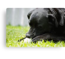 Tennis ball for lunch? Canvas Print
