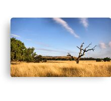 Surroundings  Canvas Print