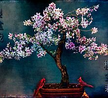 SAKURA BONSAI by Chris Lord