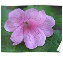 Soft and Gentle - Pink Geranium Poster