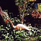 Plastic Flamingo by Katie Presley