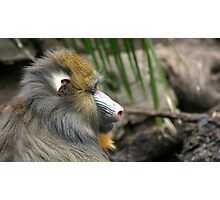 Adelaide Zoo Photographic Print