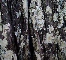 Lichen on a Tree by Adelheid