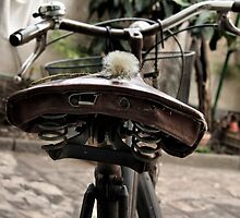 dandelion on a seat bike by marcovarro