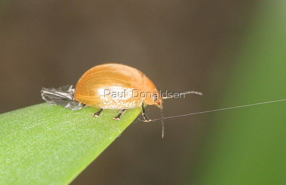 Tight rope walking lady bug by Paul  Donaldson