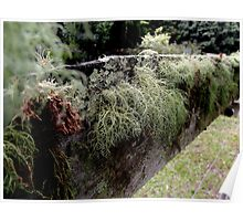 Lichens on the Fence Poster