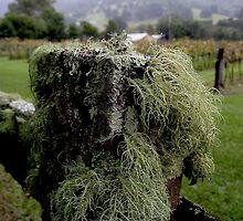 Lichens on the Post by waxyfrog