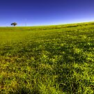 Hannam Vale pastures by craigmason