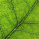 The Intricate  Leaf by Justin Baer