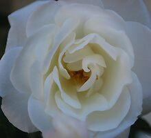 serene  by amrita125
