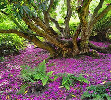 Fairy Dell at Lost Gardens Of Heligan by Mike Honour