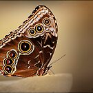 Butterfly and Oranges by CJTill