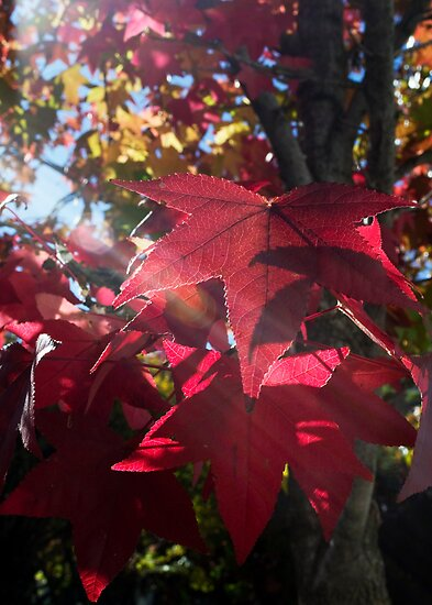 Beauty Before Leaf by Shaun Colin Bell