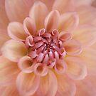 Soft Peach by OpalFire