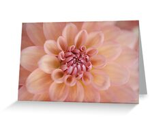 Soft Peach Greeting Card