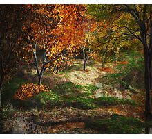 Fall Forest Photographic Print