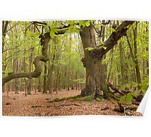 woodlands england Poster