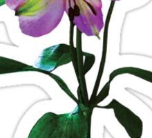 Lovely Pink Asiatic Lilies Sticker