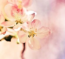 Promise of Spring by Amandalynn Jones