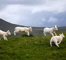 An Evening's Frolic In The Dales Onset by SteveMG