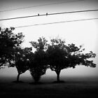 Morning Fog by DionNelson