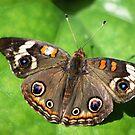 Butterfly 13.th by loiteke