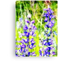 Mountain Lupines Canvas Print