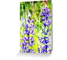 Mountain Lupines Greeting Card