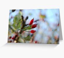 Autumn berries - South coastal walk Greeting Card