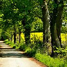 Walking on the spring country road by jchanders