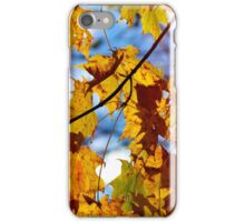 Autumn maple tree leaves iPhone Case/Skin