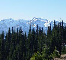 Wolf Creek Trail, Hurricane Ridge by mrscaer