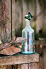 Butterfly Bottle by Kimberly Palmer