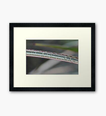 Rain Drops on the Rainbow Framed Print