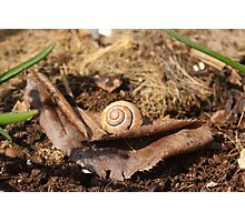 Snail on the Leaf Photographic Print