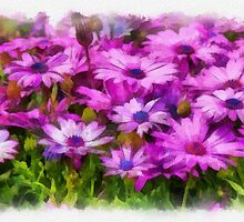 Osteospermum - watercolour by PhotosByHealy