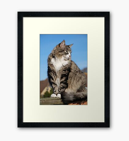 Senior silver tabby cat Framed Print