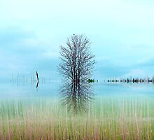 The Marsh ! by Elfriede Fulda