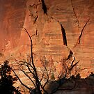 Canyon Canvas - Zion National Park by Aaron Minnick