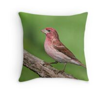 Purple Finch - a first for me! Throw Pillow