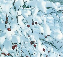 Ashy's 'Rosehips in Snow' by Art 4 ME