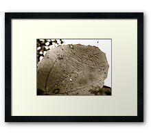 Monotone Leaf Framed Print